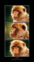 Monkey by fotoguerilla