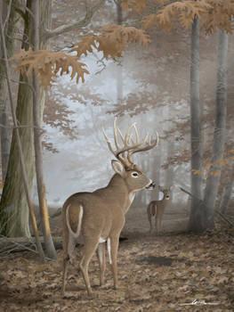 Foggy Morning Ritual