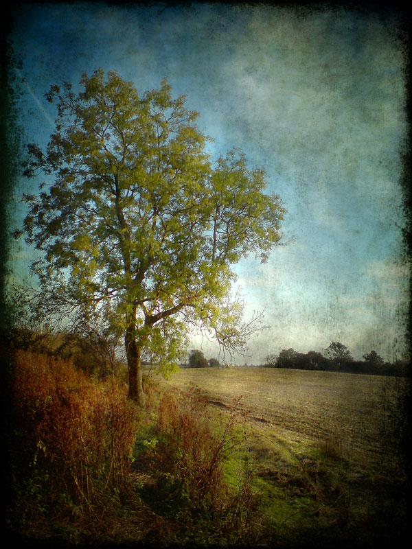 Pastoral Interlude