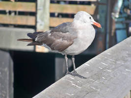 Sf Seagull by Anthony-aggro