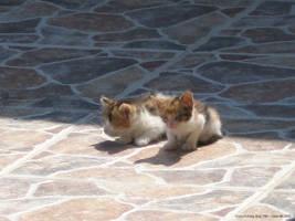 OM cute ALERT KITTENS by KimKaze