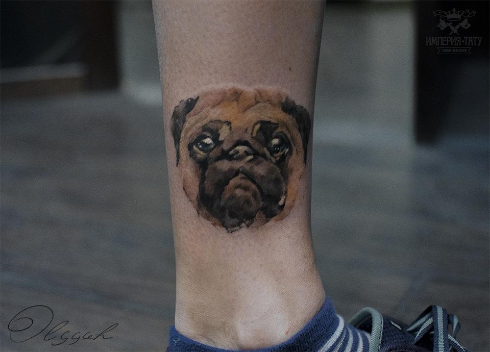 Pug by Olggah
