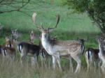 Deers  by GamesHarder