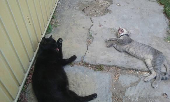 Female Cats