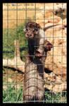 Long-otter