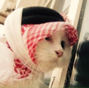 Hsmajah's Profile Picture