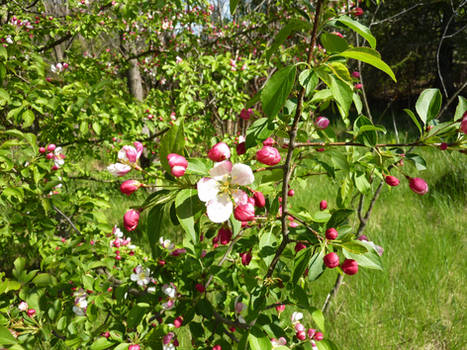 La foret en fleur / Flowering Forest