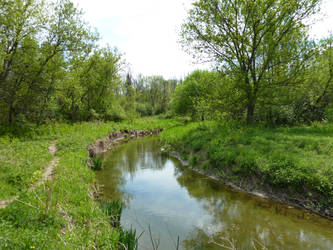 Le long du ruisseau / Along the creek