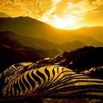 Zebra plains