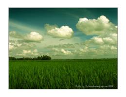 The Vietnam field by vuhoangphuong