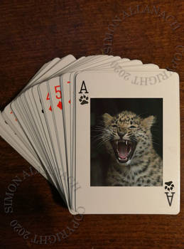 Ace of Cubs