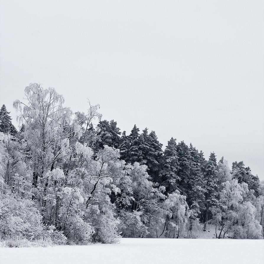 Winterscape by CalleHoglund