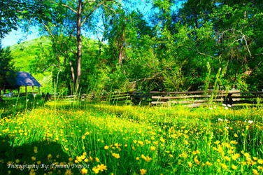 Vance Birthplace 1861 by TommyPropest-Candler
