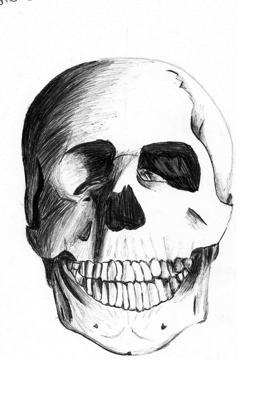 Zeru's Artwork Human_skull_by_xsilverhybridx-d3a8pw2