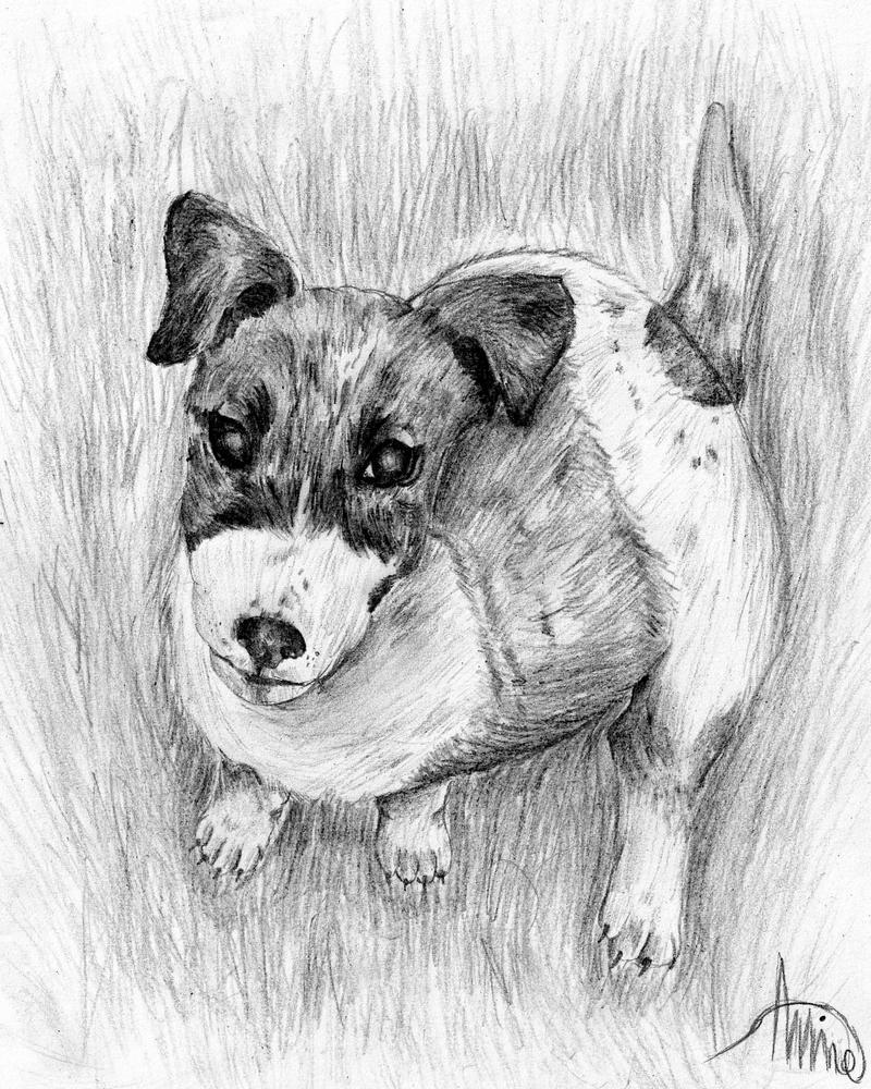 Canine Art - SilverHybrid Jack_russell_terrier_puppy_by_xsilverhybridx-d3j7rm8