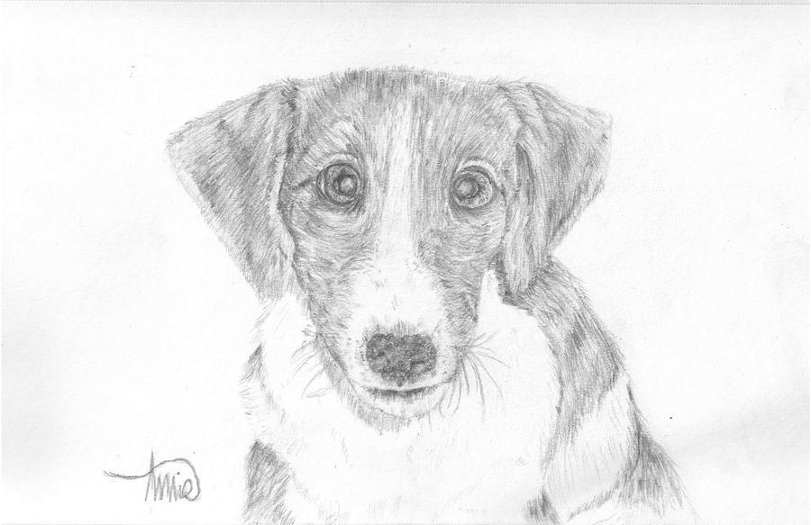 Canine Art - SilverHybrid Dawn_by_xsilverhybridx-d3jb5ha