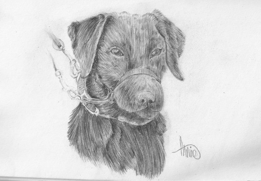 Canine Art - SilverHybrid Black_labrador_by_xsilverhybridx-d3jy6wo