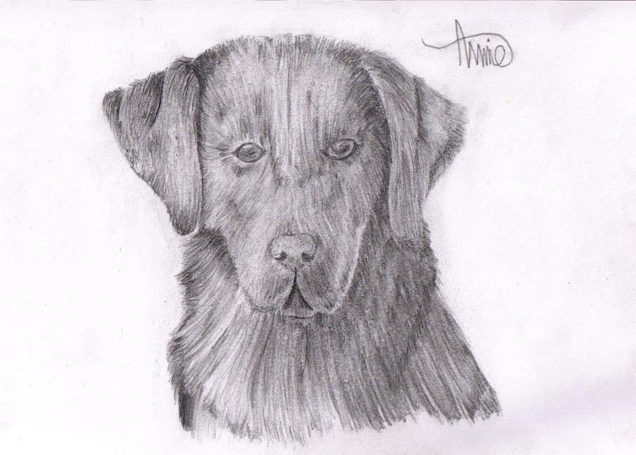 Canine Art - SilverHybrid Black_labrador__request__by_xsilverhybridx-d3k1s9g