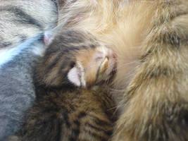 breastfeeding newborns