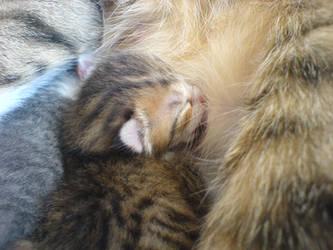 breastfeeding newborns by mariannaphotography