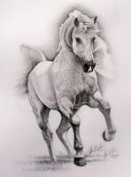 dappled horse by johnnydraws