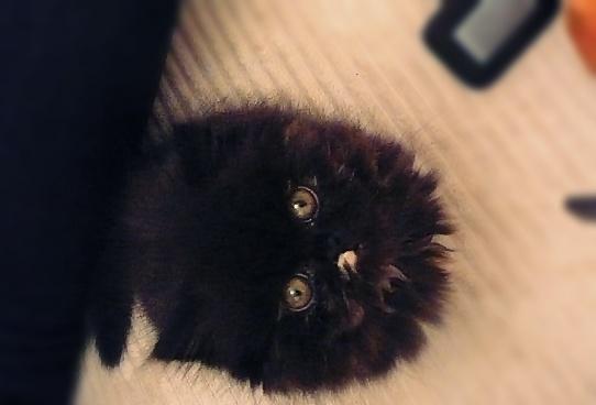 tidy cat lightweight litter reviews