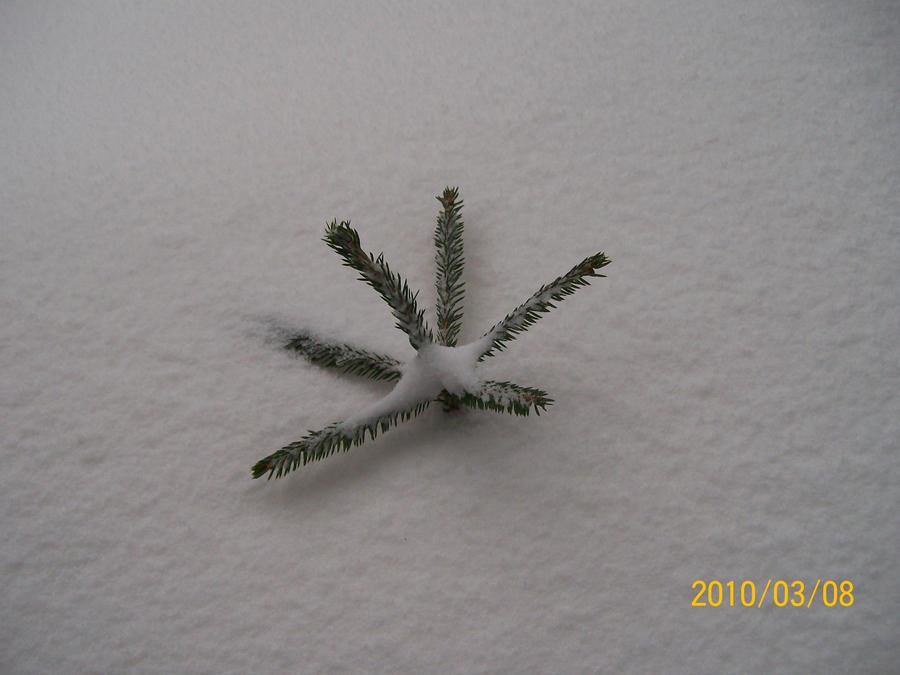 Winter is BAD by Bozzenheim