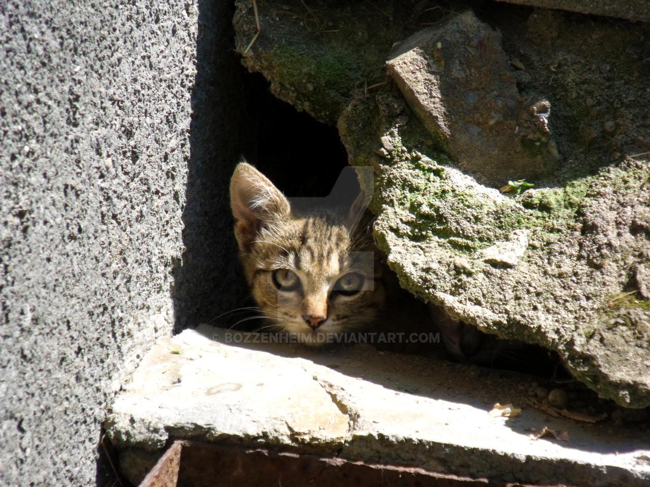 Watchful eyes by Bozzenheim