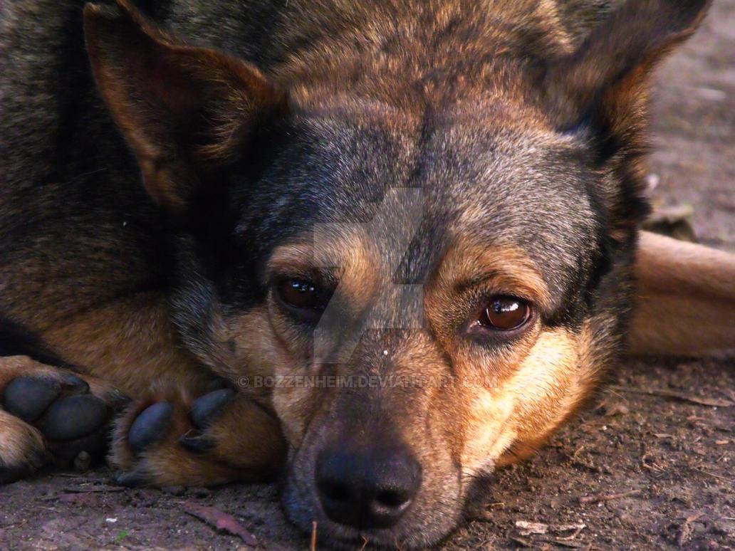 A dog's life by Bozzenheim