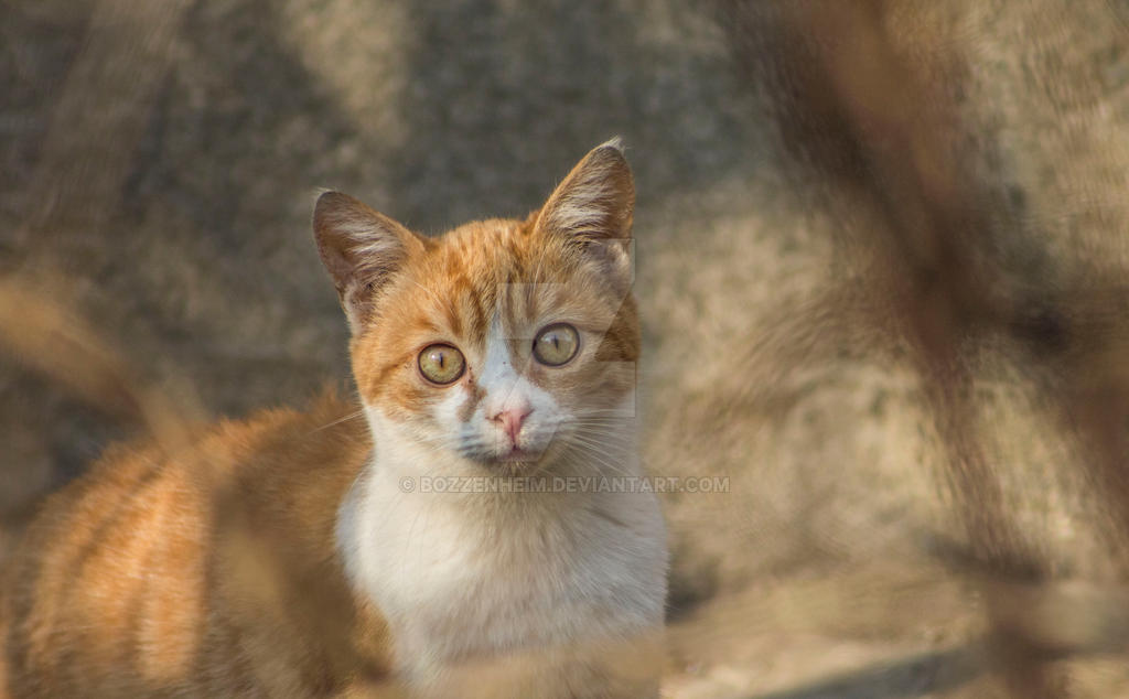 Meow by Bozzenheim