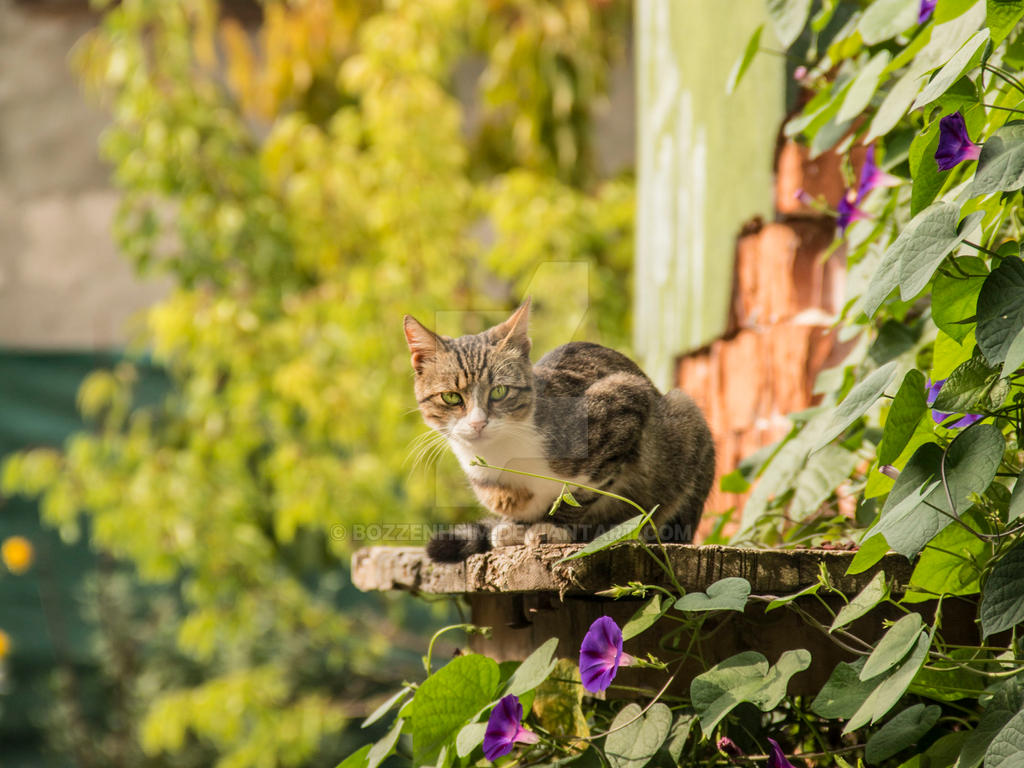 Herby the cat I by Bozzenheim
