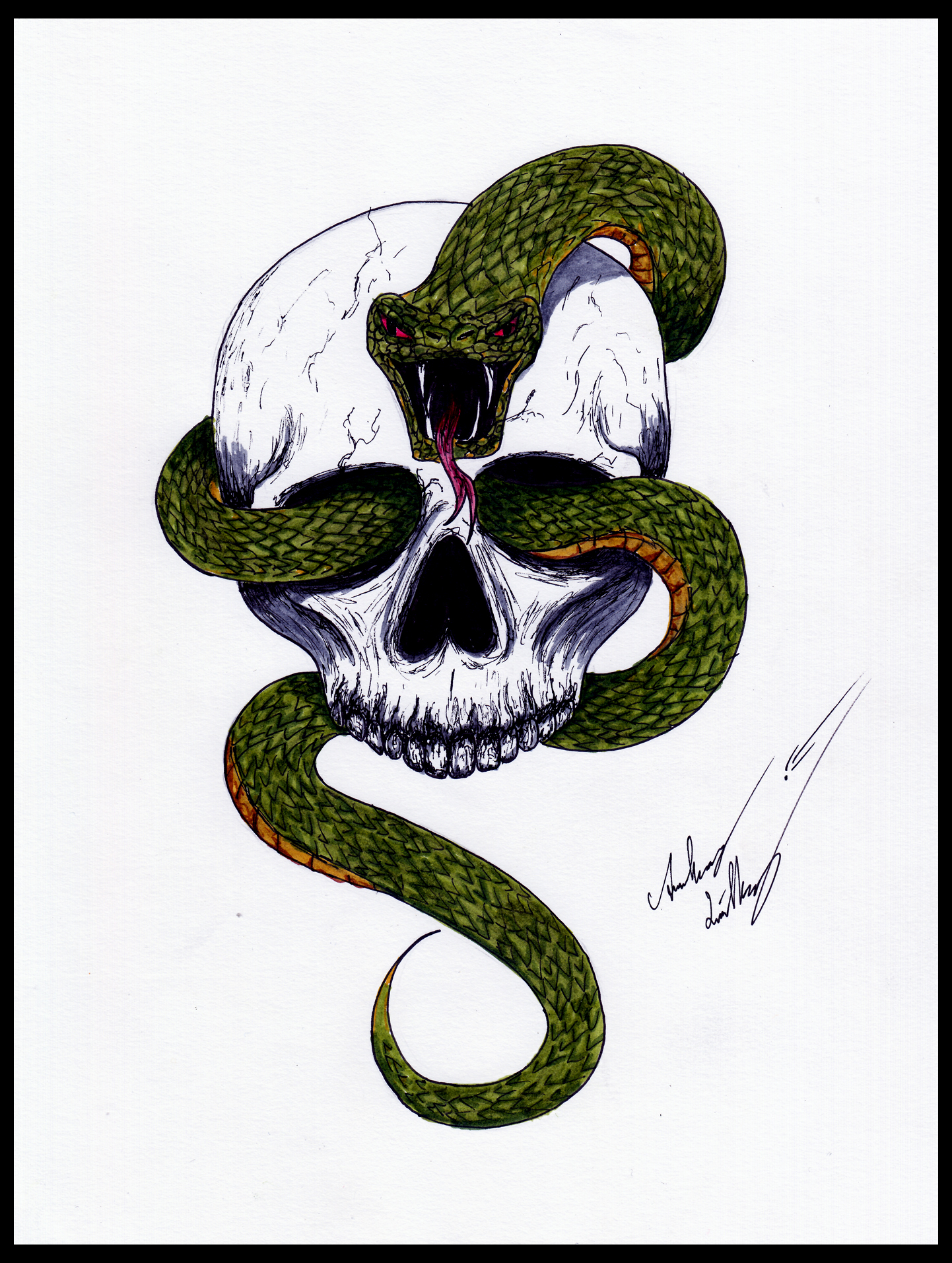 Snake skull by Blackidus on DeviantArt