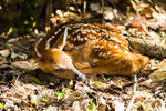 Resting in the sun by JMcKeePhotography