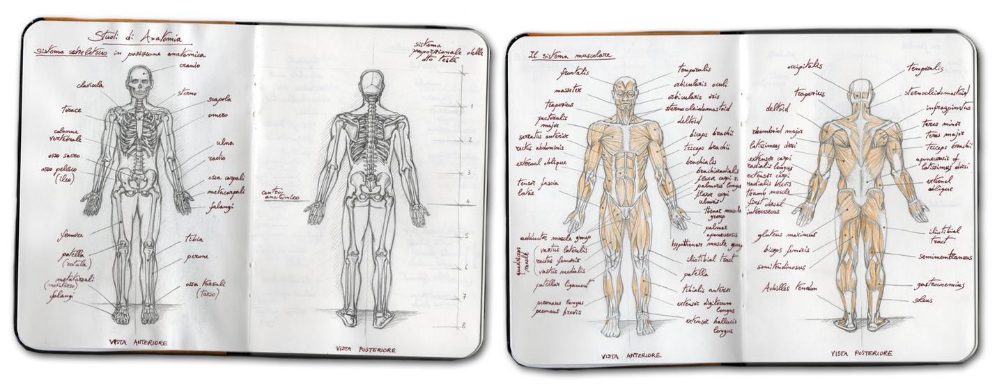 Human Anatomy Study by Panaiotis