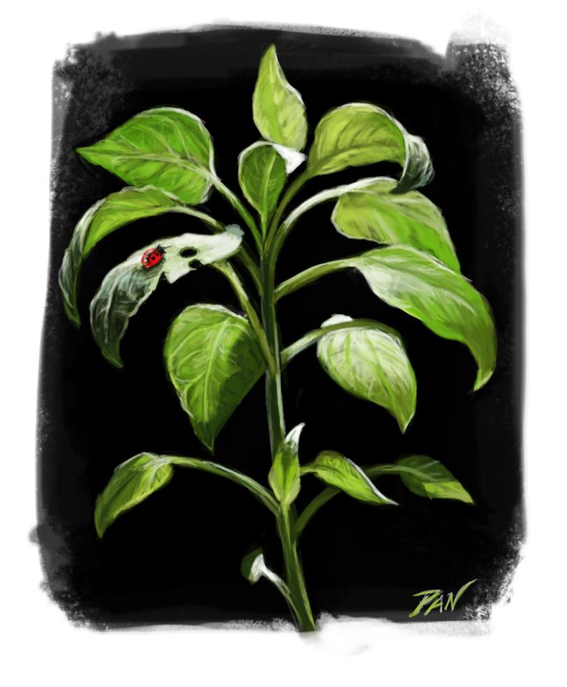 Esercizio su luce e foglie by Panaiotis