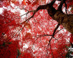 red tree by CrazyNuts