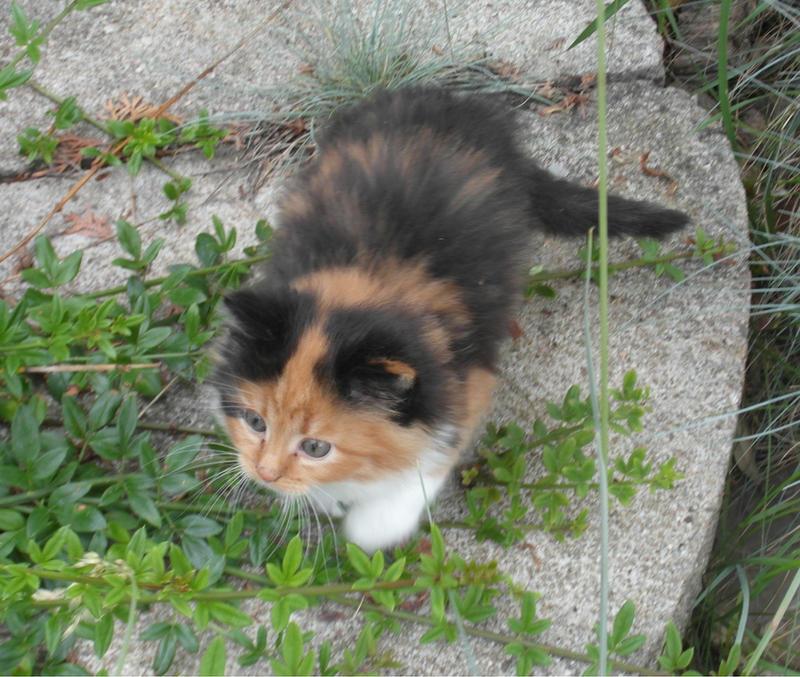 Kitty by Nesmeri