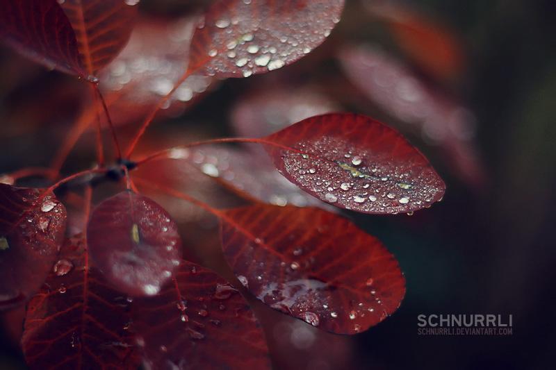 autumn wonderland by schnurrli