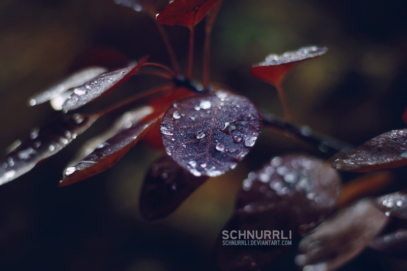 beautiful silence by schnurrli