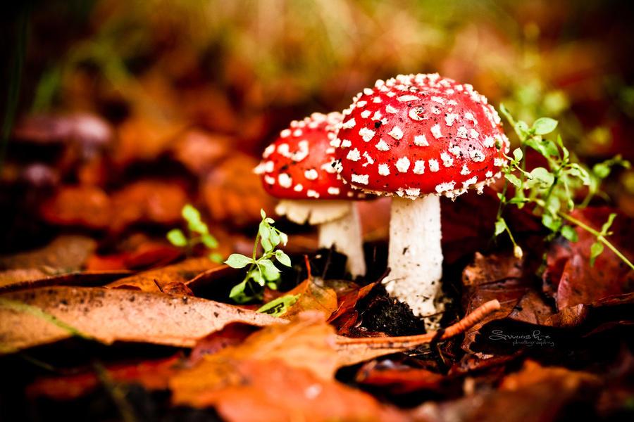 Alice in Wonderland by Swoosh-e