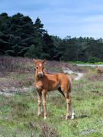 foal by smevstock