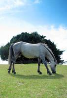 forest pony 2 by smevstock