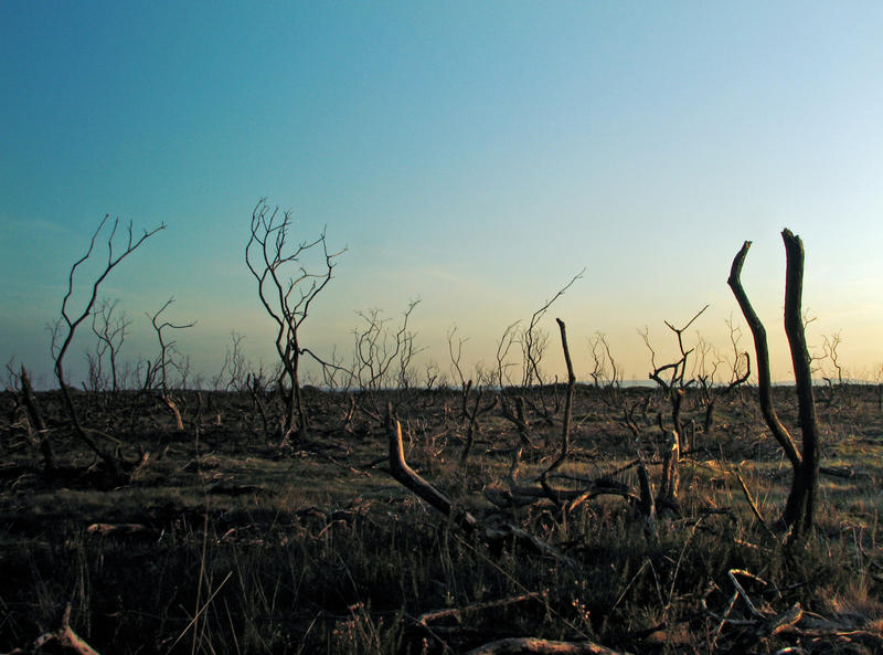 wasteland 2 by smevstock