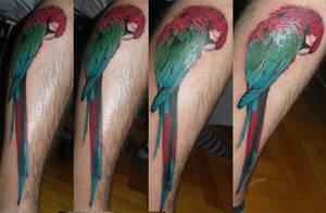 papagan parrot tattoo by tordah