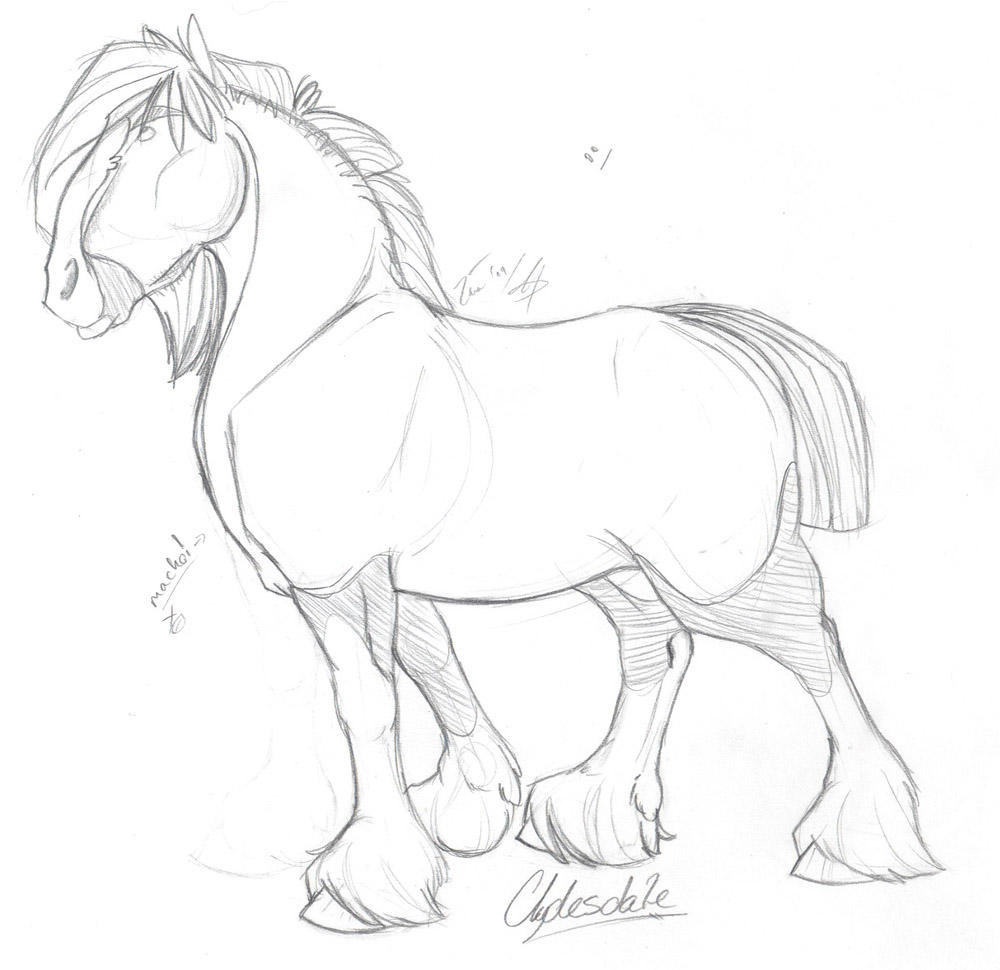 clydesdale coloring pages clydesdale sketch by taa on deviantart