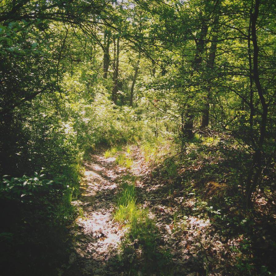 Path to the light by Stransky