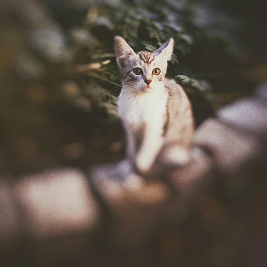 Curious Tom by Stransky
