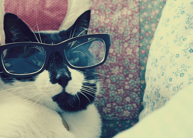 my cat is a hipster by Nekopie