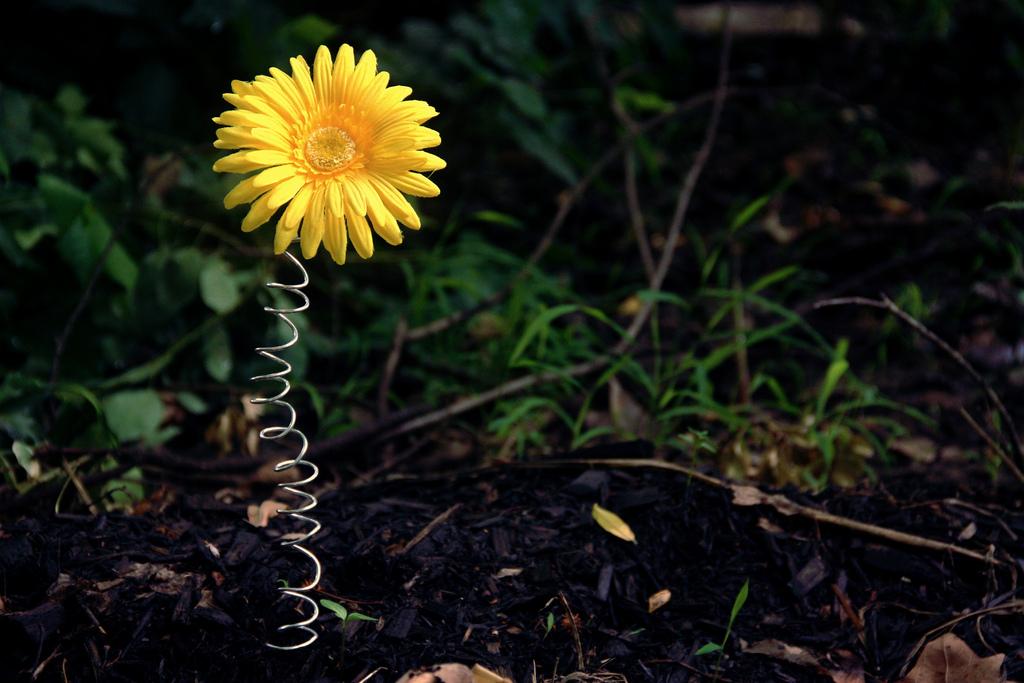 A Spring Flower by Nekopie