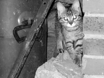 Fanfan's cat by bueyedgirl
